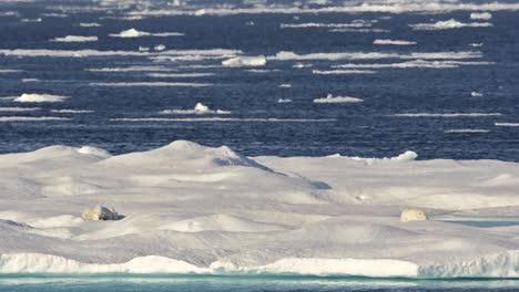 Eisbär-Sau-Und-Clubs-Schlafen-Auf-Meereis-In-Der-Hitze-In-Der-Nähe-Von-Baffin-Island-In-Nunavut-Kanada-Can