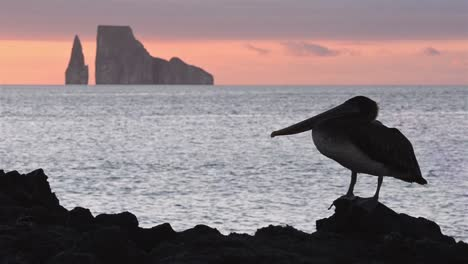 Pelican-silhouette-and-Leon-Dormido-from-Cerro-Brujo-on-San-Cristobal-Island-in-the-Galapagos-National-Park-1