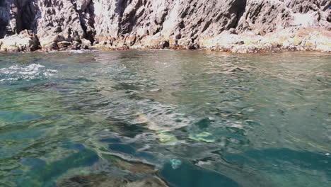 Hermosa-Foto-De-Leones-Marinos-Nadando-Y-Saltando-Del-Océano-En-Baja-California-México-1