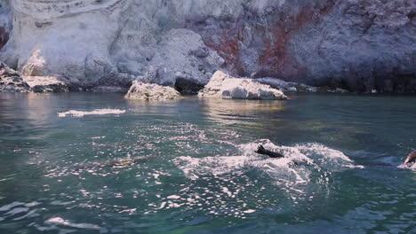 Hermosa-Foto-De-Leones-Marinos-Nadando-Y-Saltando-Del-Océano-En-Baja-California-México-3