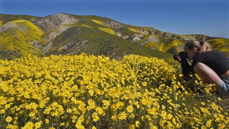 Carrizo-Plain-California-Daisy-wildflowers-superbloom-and-young-girl-photographer-panning-right-1
