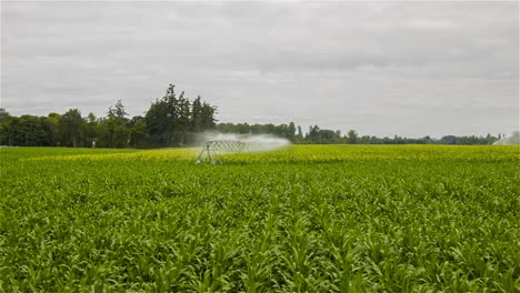 An-aerial-over-a-sprinkler-system-watering-an-agricultural-field