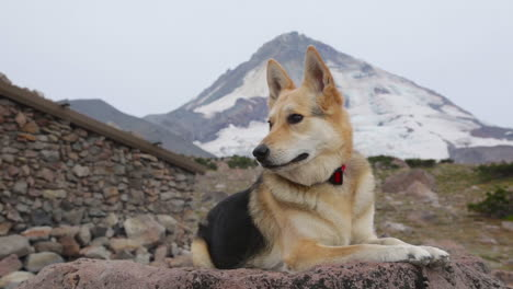 A-beautiful-dog-sits-on-a-rock-in-the-wilderness