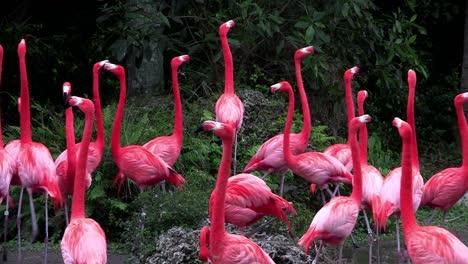 Los-Flamencos-Se-Reúnen-En-Los-Everglades-1