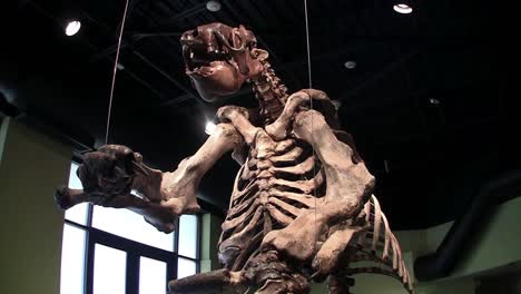 A-dinosaur-stands-in-a-museum-display