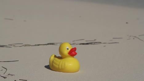 Beach-Duck-00