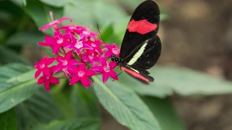 Schmetterling-Hautnah-01