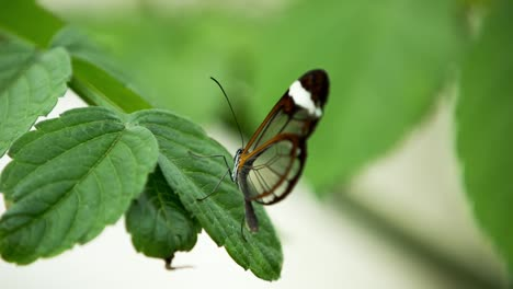 Butterfly-Close-Up-08
