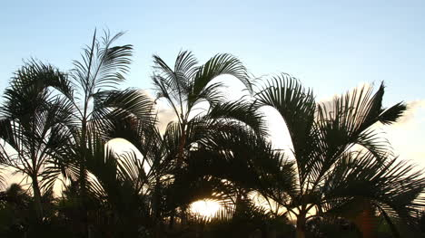 Cancun-Palm-Tree-1
