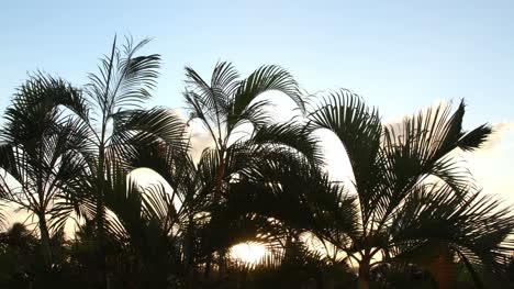 Cancun-Palm-Tree-1