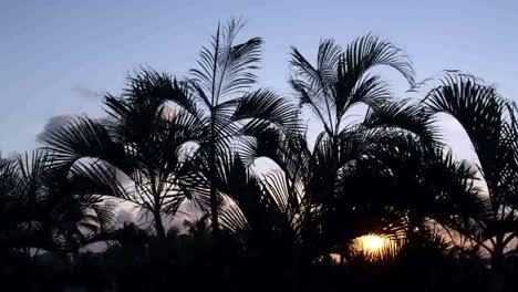 Cancun-Palm-Tree-4