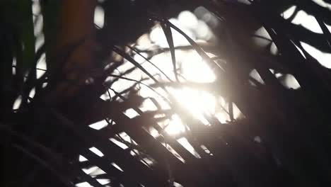 Cancun-Palm-Trees-21
