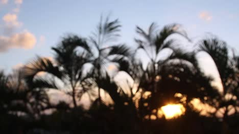 Cancun-Palm-Trees-2