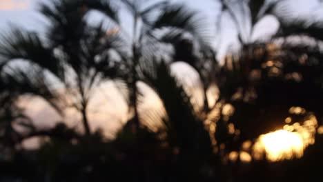 Cancun-Palm-Trees-5