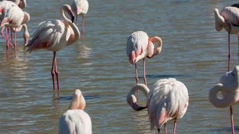 Carmargue-Flamingos-03