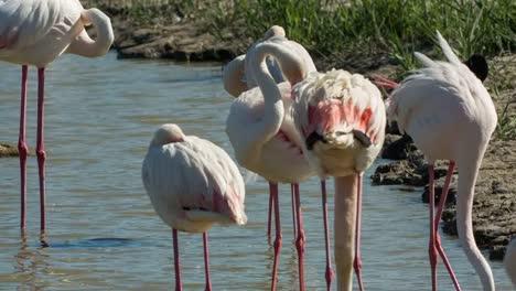 Carmargue-Flamingos-05
