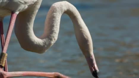 Carmargue-Flamingos-06