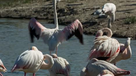 Carmargue-Flamingos-08