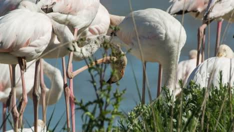 Carmargue-Flamingos-10