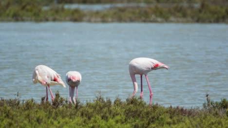 Carmargue-Flamingos-18