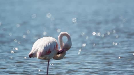 Carmargue-Flamingos-23