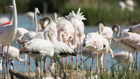 Carmargue-Flamingos-32