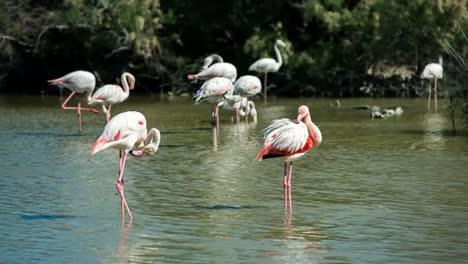 Carmargue-Flamingos-40