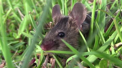 A-small-mouse-sits-in-green-vegetation