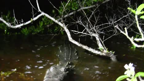 A-crocodile-snaps-at-the-camera