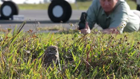 A-nature-photographer-takes-photos-of-a-burrowing-owl-at-its-nest