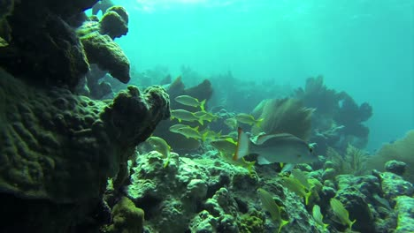Beautiful-tropical-fish-swim-around-a-reef-underwater-2