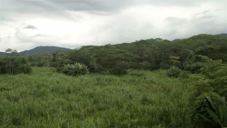 Schwenk-über-Eine-Dschungelszene-In-Costa-Rica