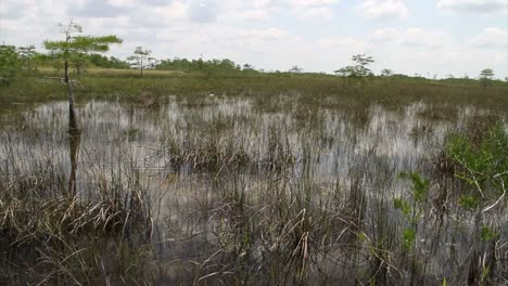 Pan-across-the-Florida-Everglades
