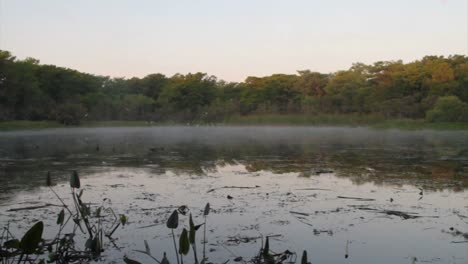 Pan-across-a-swamp-in-the-Florida-Everglades