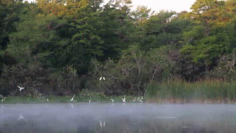 Fog-over-the-Florida-Everglades-with-birds-flying