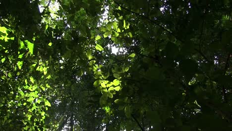 A-low-angle-looking-up-at-the-forest-canopy-with-sunlight-coming-through