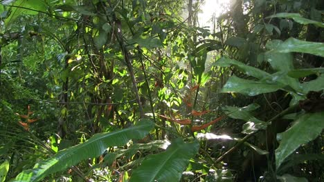 A-slow-tilt-down-in-a-beautiful-jungle-rainforest