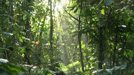 A-slow-tilt-up-in-a-beautiful-jungle-rainforest