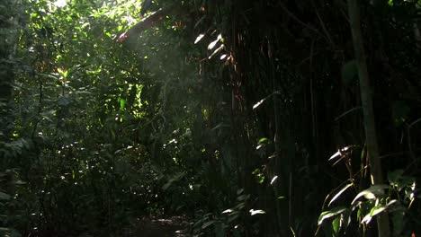 A-slow-tilt-up-in-a-beautiful-lush-jungle-rainforest