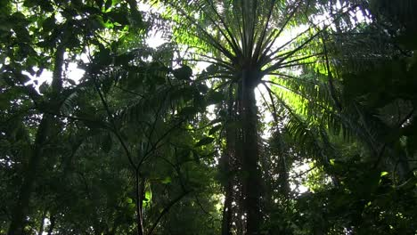 A-slow-tilt-up-in-a-beautiful-lush-jungle-rainforest-1