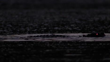 Ein-Alligator-Springt-Nachts-Mit-Leuchtenden-Augen