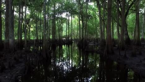 POV-shot-traveling-through-a-dark-cypress-swamp