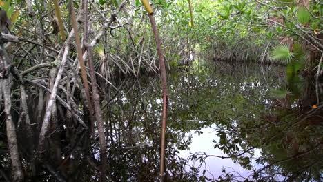 POV-from-a-boat-through-the-Florida-Everglades