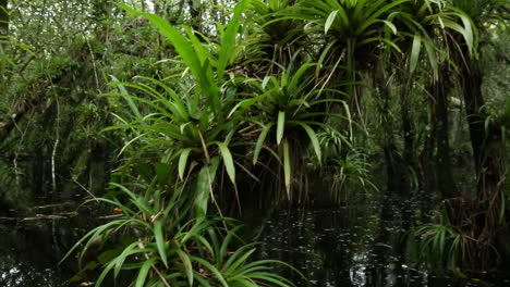 Rising-POV-shot-traveling-through-a-swamp-in-the-Everglades-1