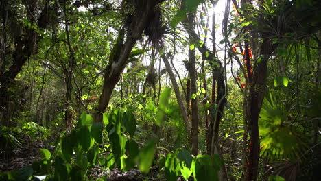 Toma-Panorámica-A-Través-De-Un-Pantano-Brumoso-En-Los-Everglades-1