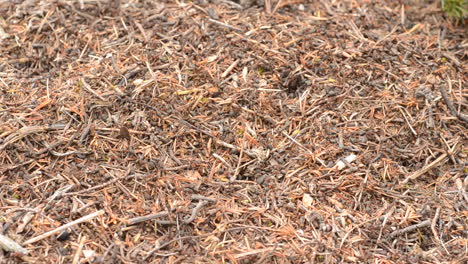Ants-swarm-all-over-the-forest-floor