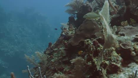 Cozumel-Dive-01