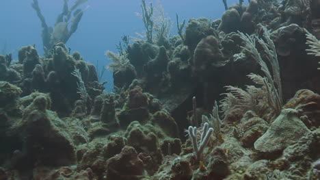 Cozumel-Dive-03