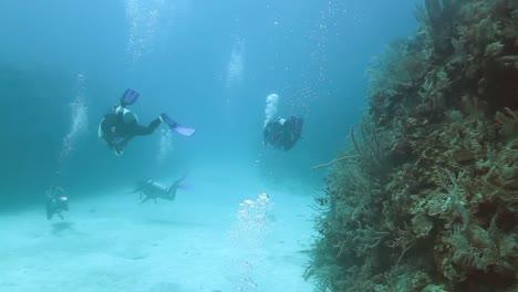 Cozumel-Dive-09