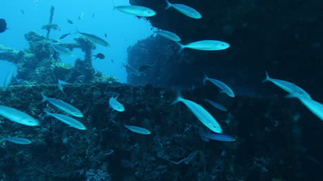 Cozumel-Dive-10